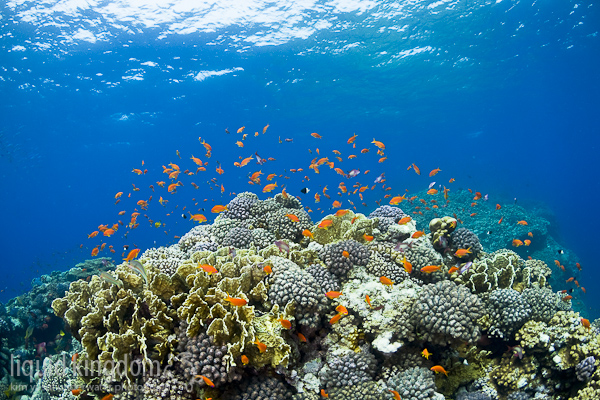 Red Sea I