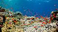 Red Sea VI