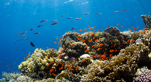 Red Sea VII