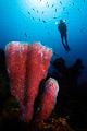 sponge & diver II