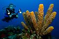sponge & diver III