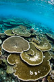 coral bleaching