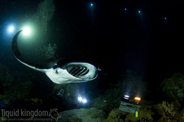 Kona Manta Night Dive I