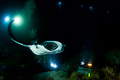 Kona Manta Night Dive I