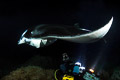 Kona Manta Night Dive III
