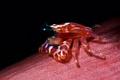 Painted porcelain crab