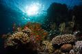 Red Sea VIII