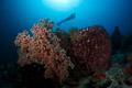 Bangka Reef Scape